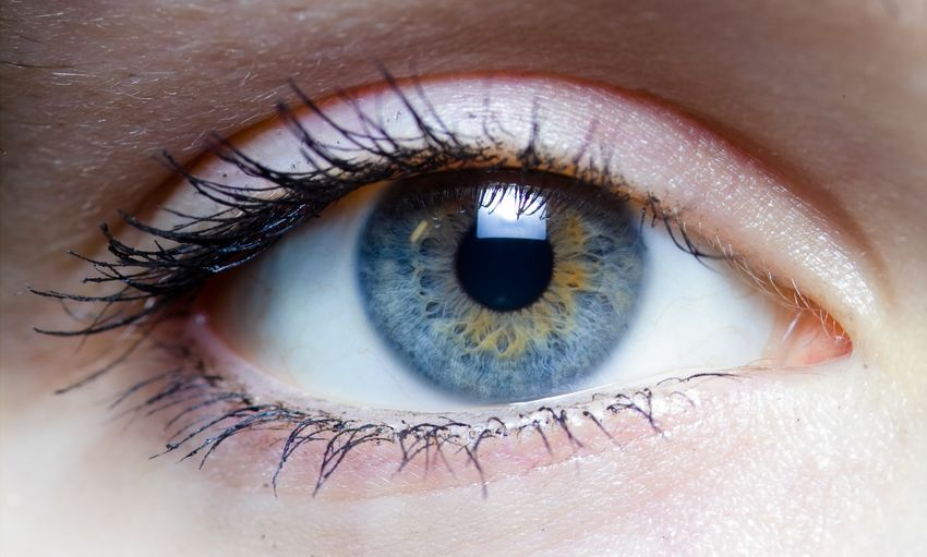 vitasentis - Feldenkrais - atelier du mouvement - Les yeux